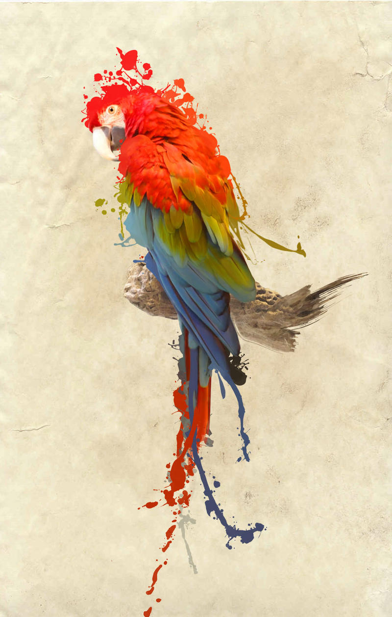 Green wing macaw by Armonah