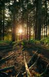 Woodland sundown