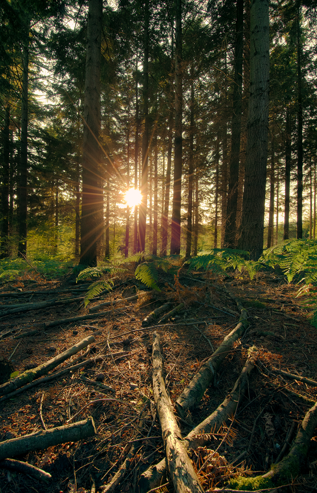 Woodland sundown by SevenHeptagons