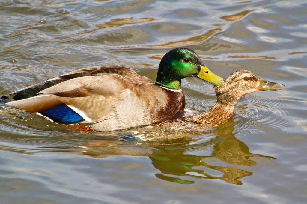 Duck Tour Length