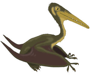 Pterodactylus by MisterBug