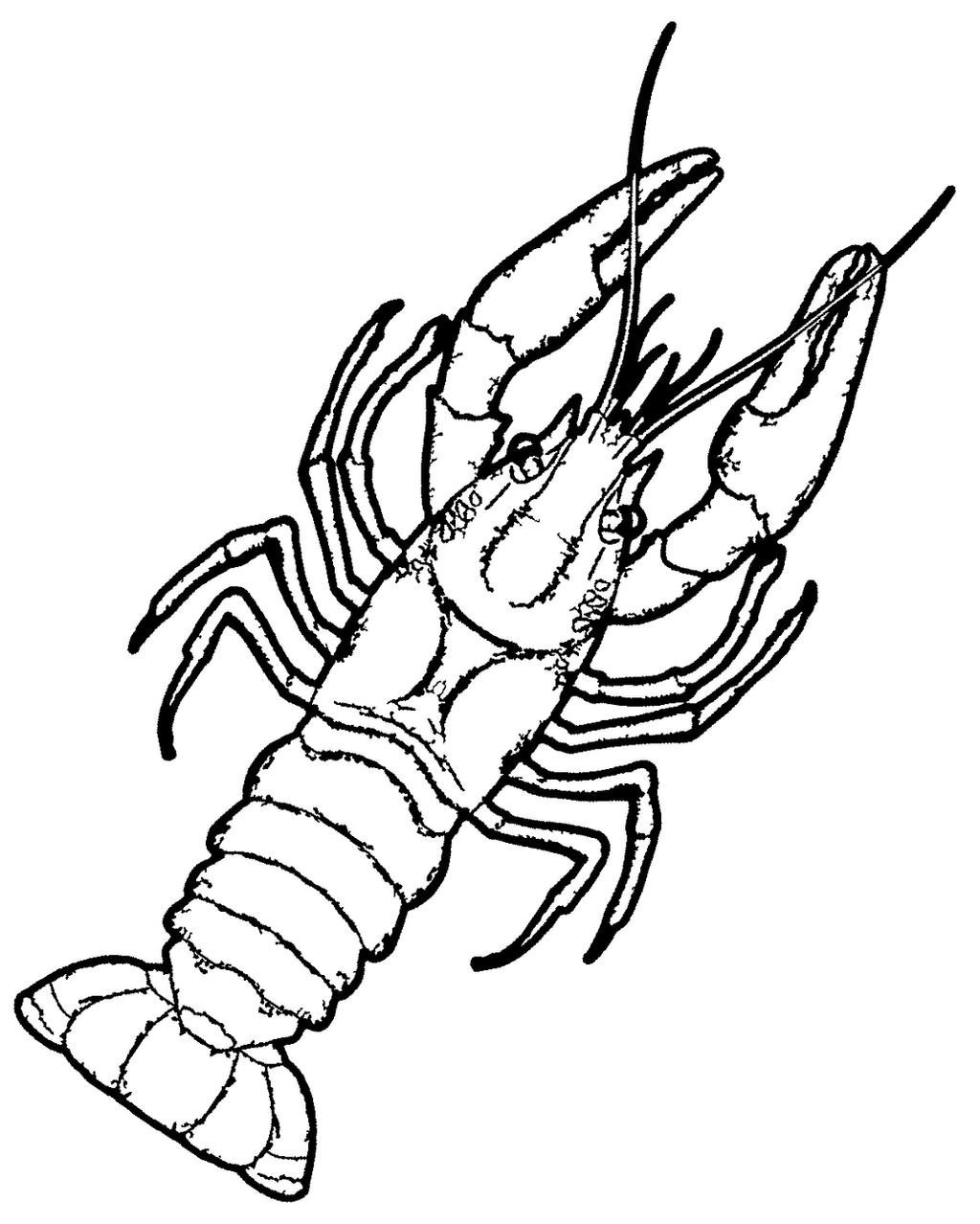 Crayfish Coloring Page Coloring Pages Crayfish Coloring Page