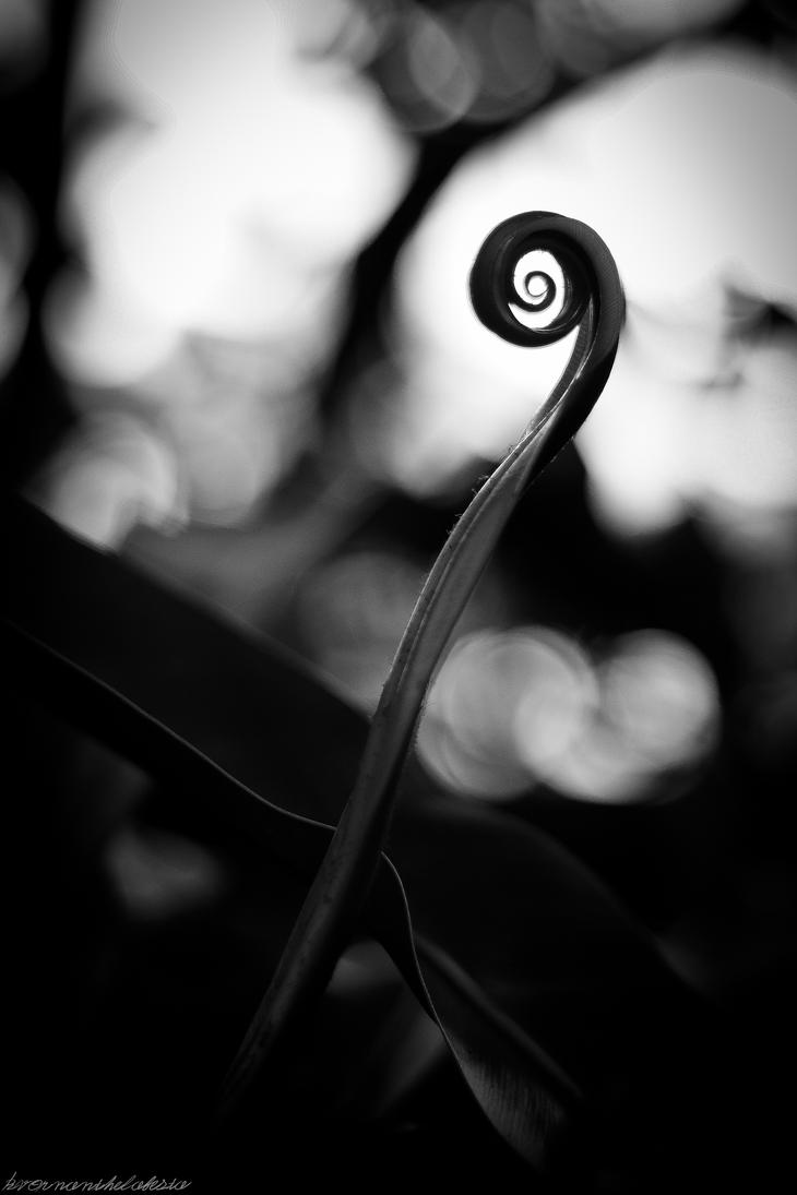 Emergence - Leaf Curl Grayscale by KvornanTheLafesta