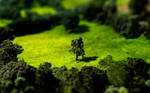 Tilt Shift Meadow