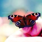 Butterfly fly away.