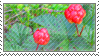 cloudberry stamp