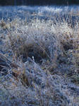 Frozen Grass by rihosk