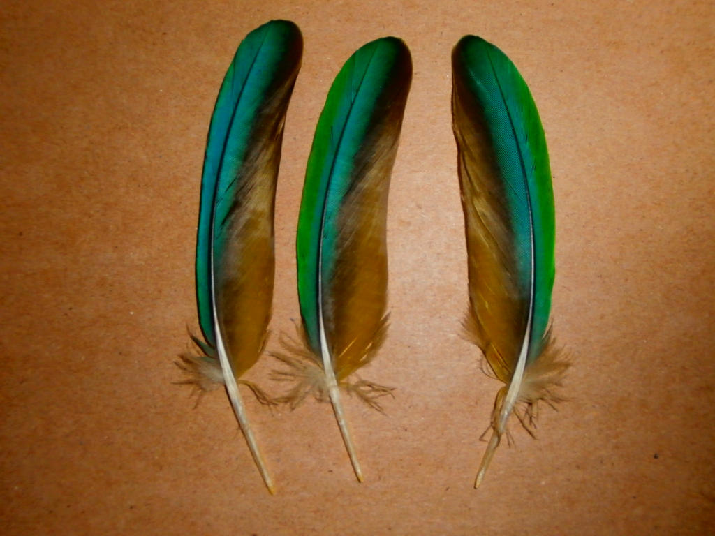 Yellow collared macaw feathers by urbanarthermit on deviantart for Where can i buy feathers for crafts