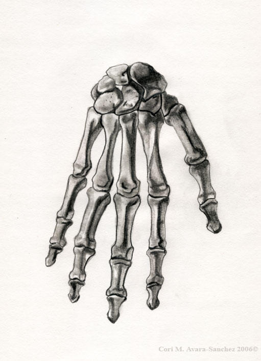 Right skeletal hand human male by brigettemora on deviantart right skeletal hand human male by brigettemora ccuart Choice Image
