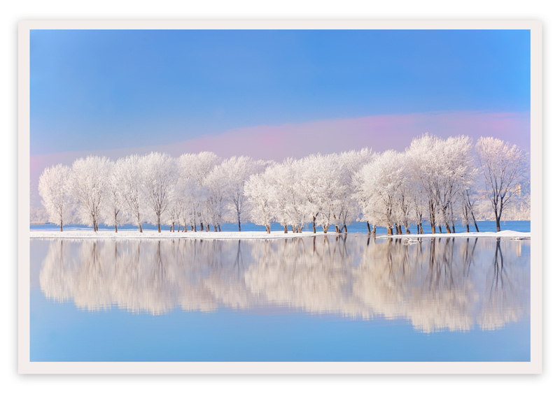 winter trees by jordache