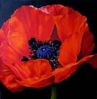 Poppy by Lillemut
