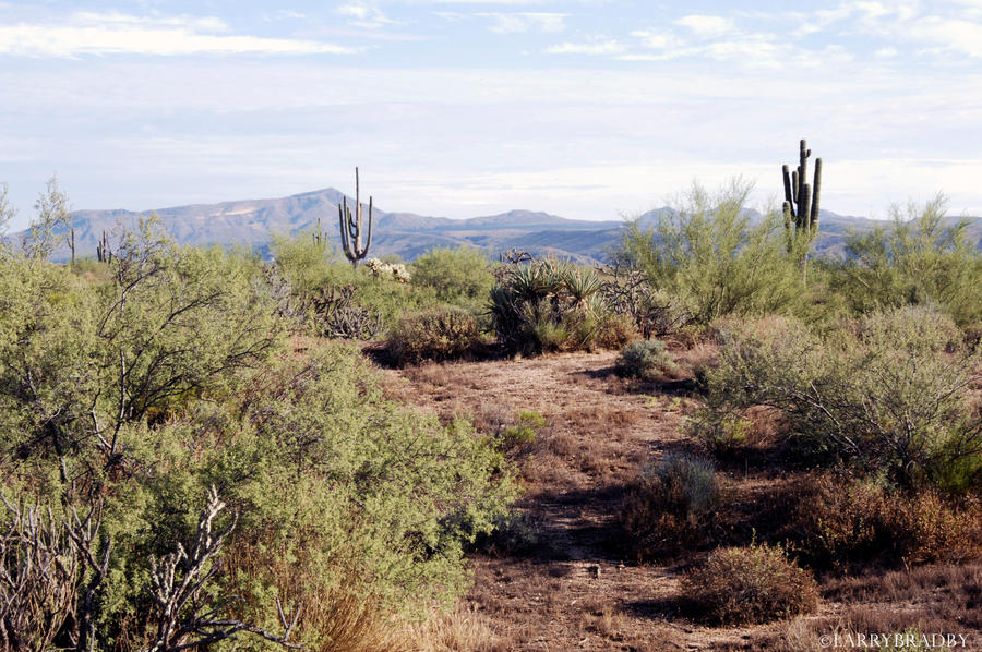 Arizona 3 by larrybradbyphoto