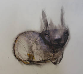Leporidae by StefanThompson