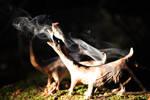 dragon dogs