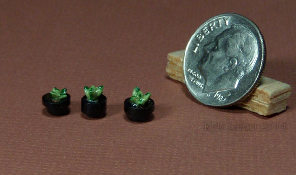 Quarter Inch Scale Aloe Plants in Black Planters by Kyle-Lefort