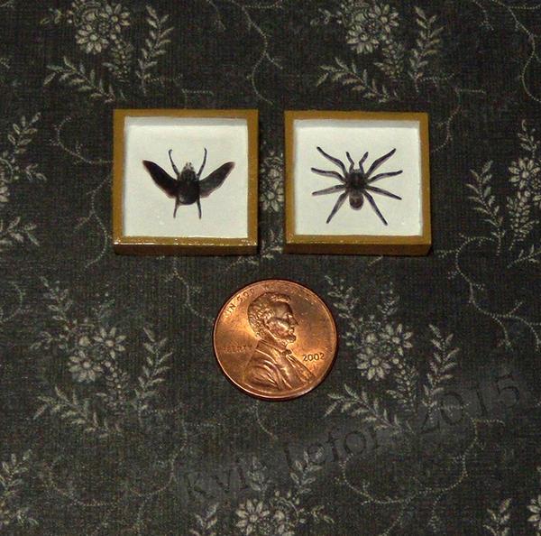 Mini Goliath Beetle and Bird Eating Tarantula by Kyle-Lefort