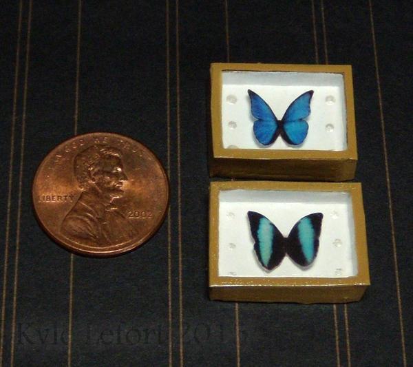 Mini Morpho Butterfly Riker Mounts Set by Kyle-Lefort