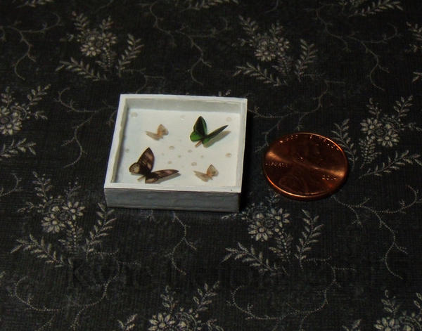 Miniature Birdwing and IO Moth Display by Kyle-Lefort