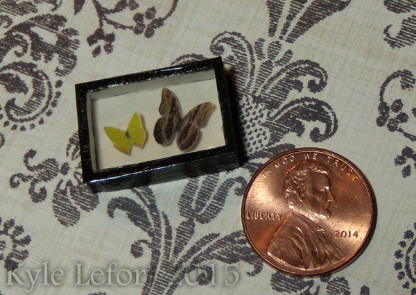 Mini Owl Eye and Tailed Sulfur Butterfly Display by Kyle-Lefort