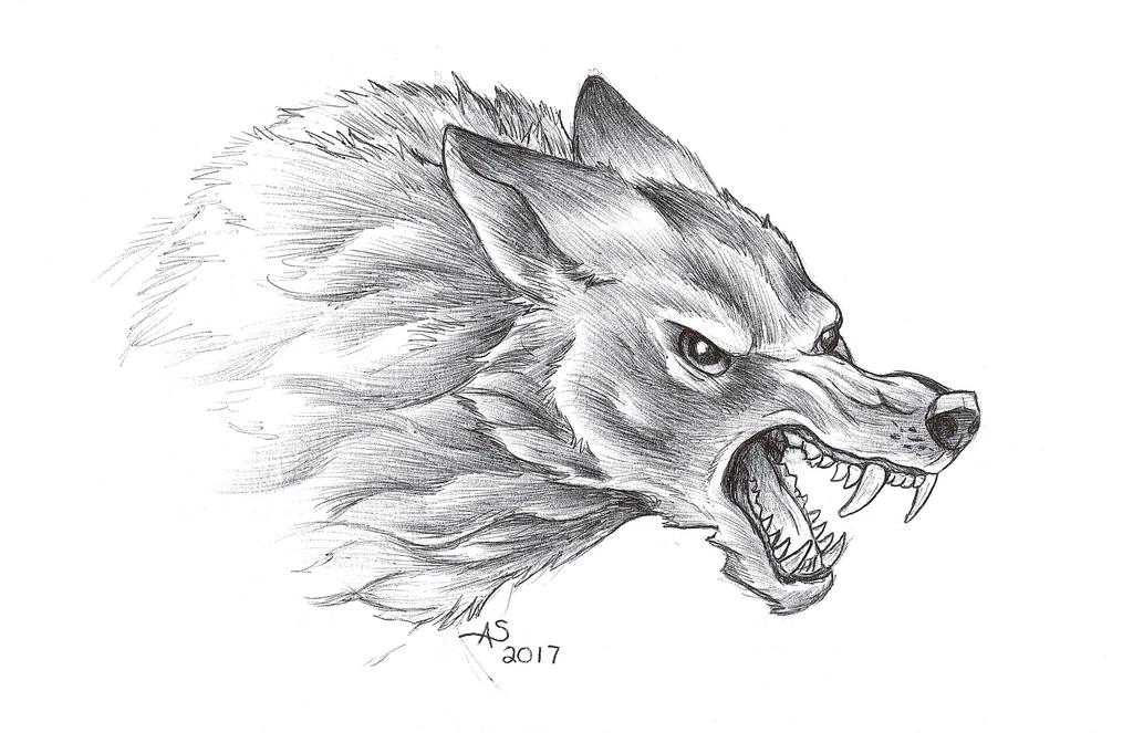 Wolf Sketch by Fireberd904