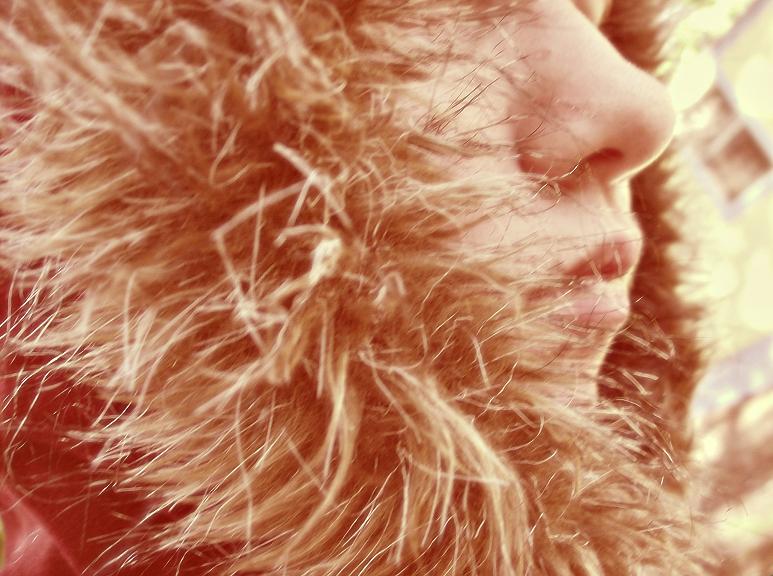 Lion's Mane by dwightyoakamfan