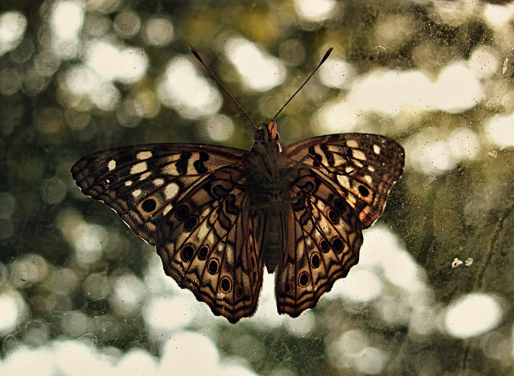 Butterfly Stock by dwightyoakamfan