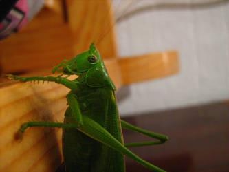 Grasshopper monster by Stoyansky