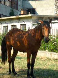 Horse by Stoyansky