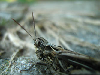 Grasshopper 2: Back in black by Stoyansky