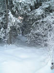 Winter 1.2