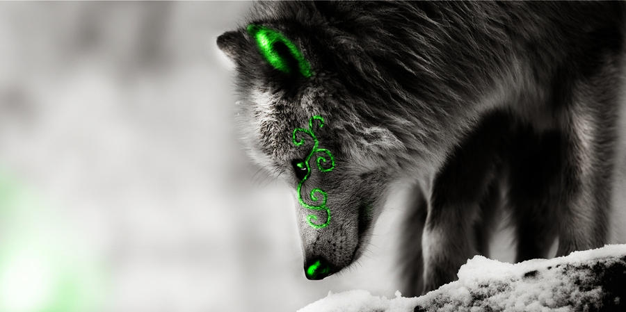 Cool Green Wolf Wallpaper Collection 12 Wallpapers
