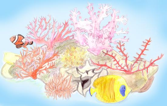 Coral Reef (2015)