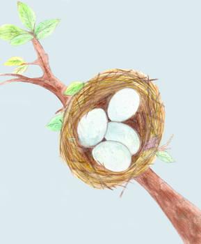 Spring Nest (2015)