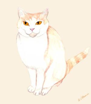 Edward the Cat