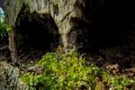 .: Circle of Life: Tree :.