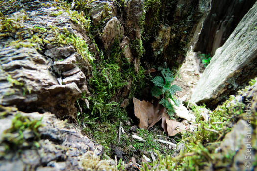 Landscapes in Trees: Cave