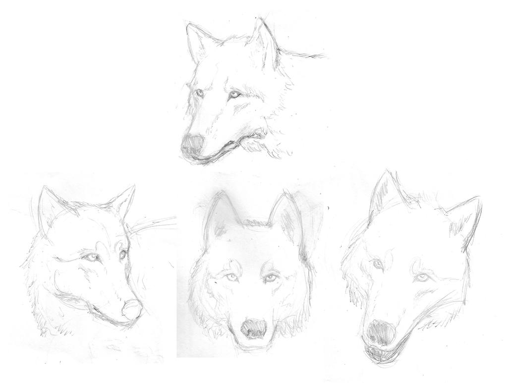 Wolves sketches by B4LD3R