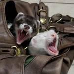 Double Yawns by kwsapphire
