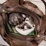 Love My Ferrets by kwsapphire