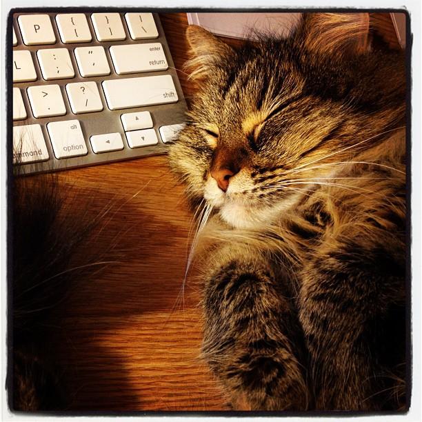 feline names mythology