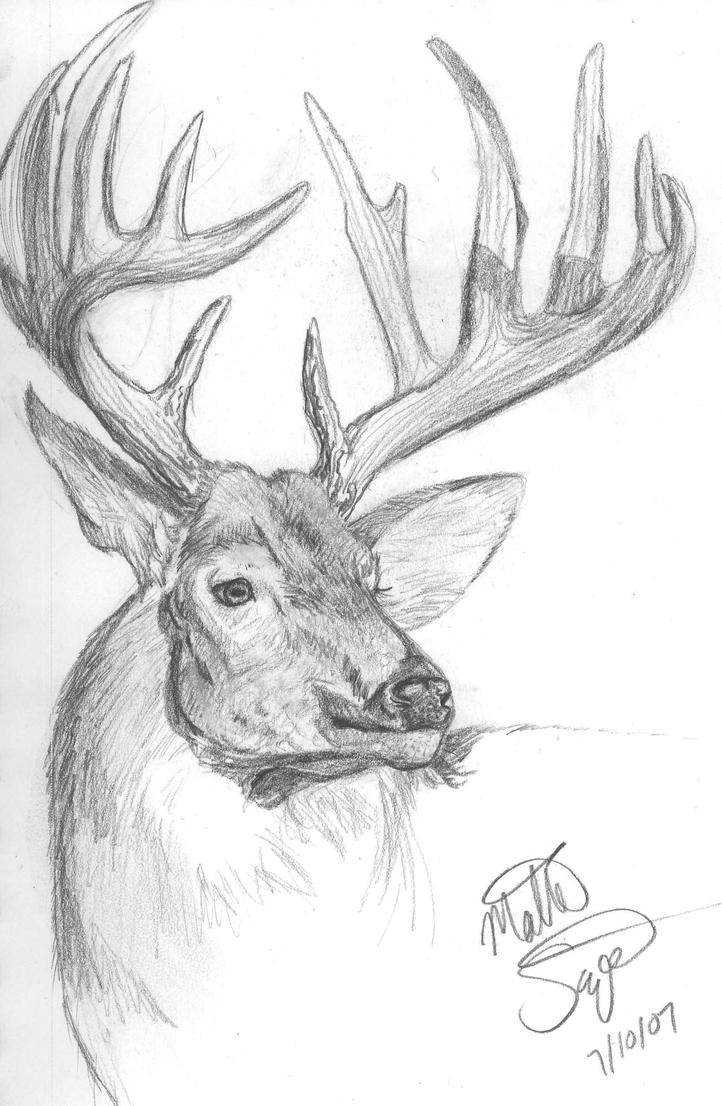 It is a picture of Exhilarating White Tailed Deer Drawing