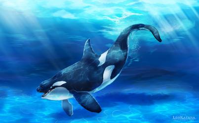 Happy Orca by LeoKatana