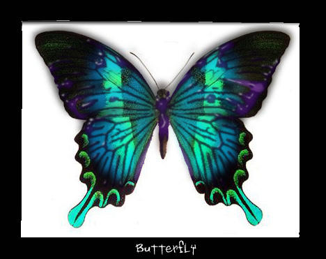 Real Colorful Butterfly Pictures   www.pixshark.com ...