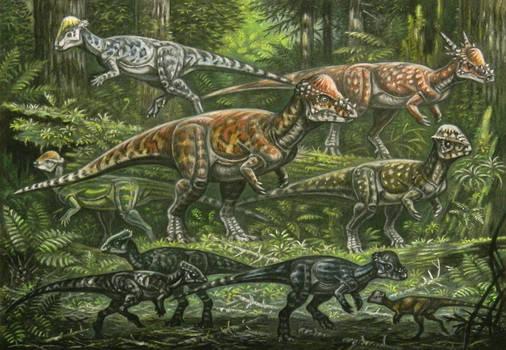 Pachycephalosauridae