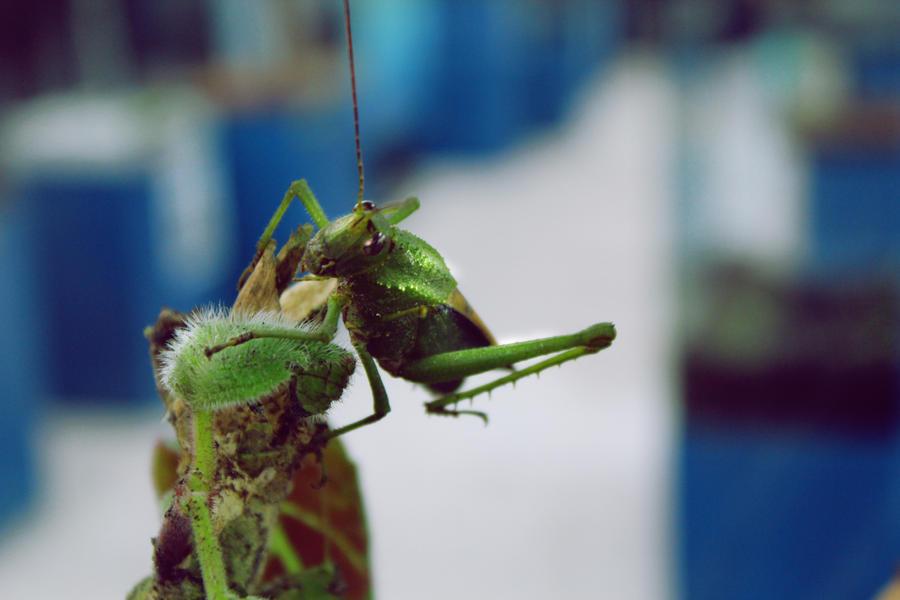Grasshopper by alex torres on deviantart for Axex shop galeria jardin