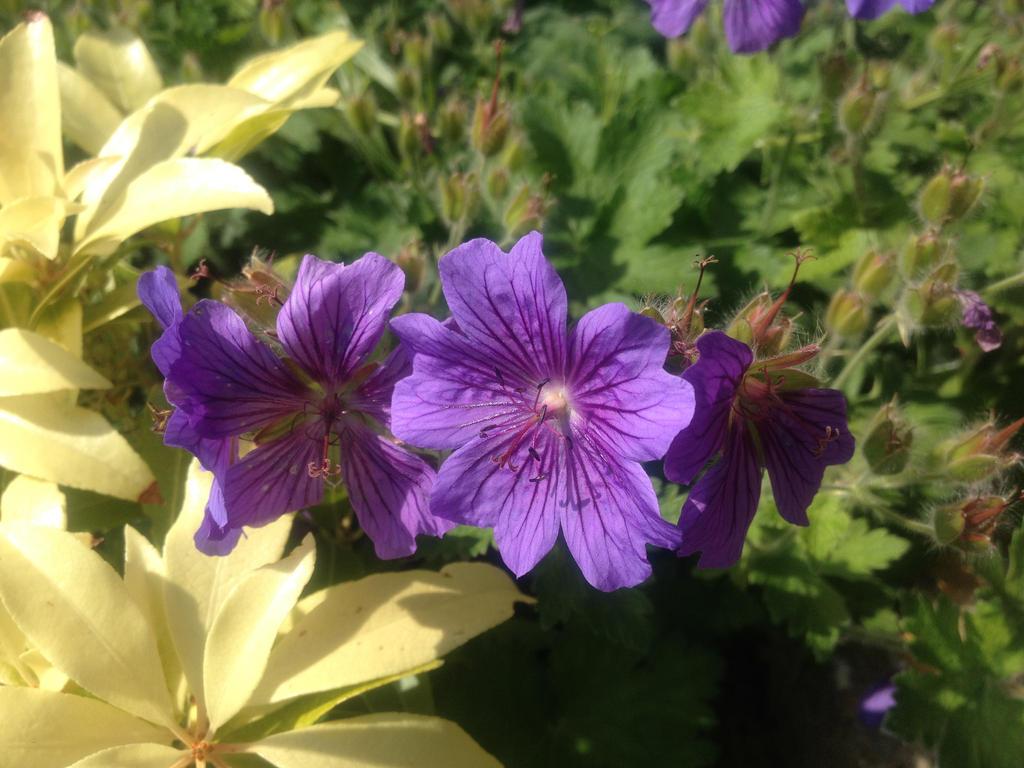 Flower by Judan