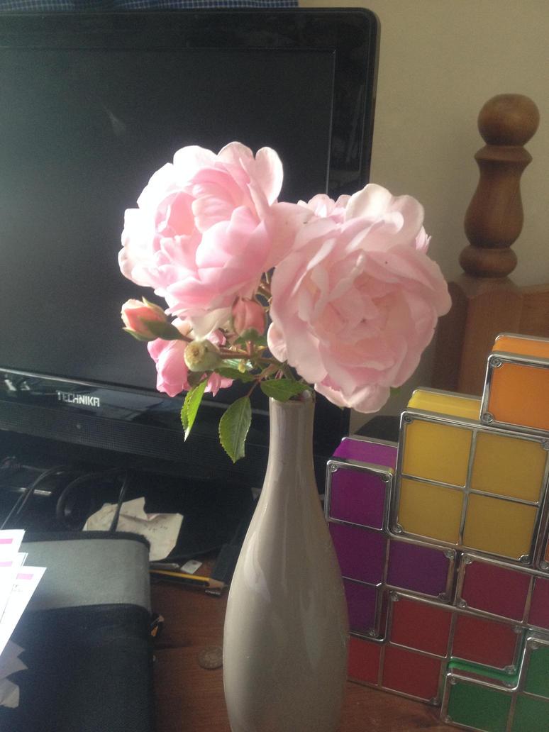 Roses by Judan