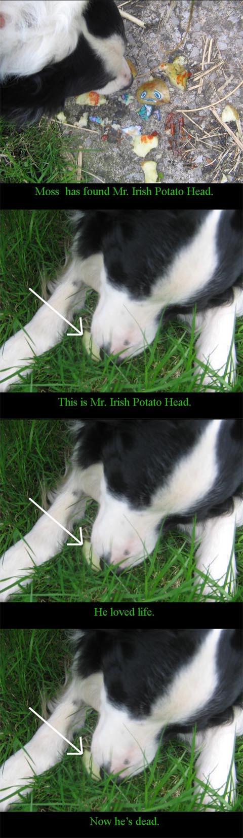 This is Mr. Irish Potato Head4 by Judan