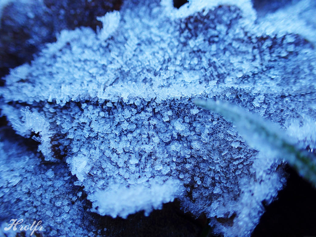Frost I by Horlf