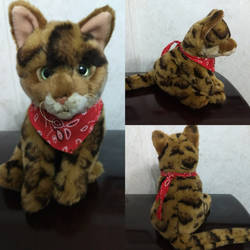 Webkinz signature bengal cat